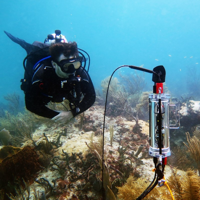 Aquatic Respiration and Photosynthesis CISME Coral Measurements