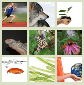 A collage of images that represent animals, plants and the environment around us.