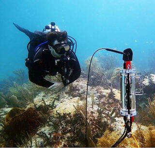 CISME coral measurements